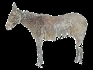 Mule PNG